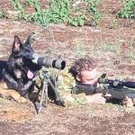 Tired of your dog? Deploy him to Afghanistan!